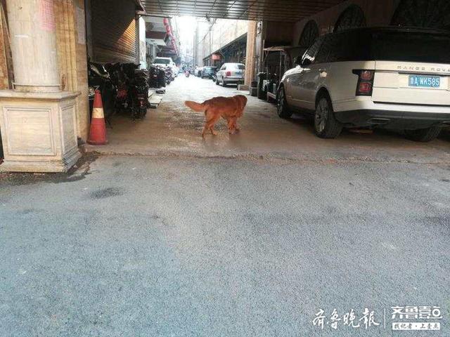 济南一男子房屋难以出租 只因楼下的狗狗