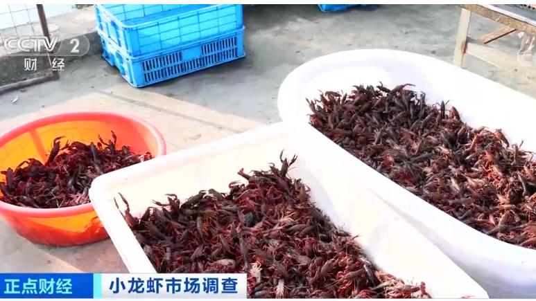 夏天宵夜季到来 这份小龙虾食用攻略请收下
